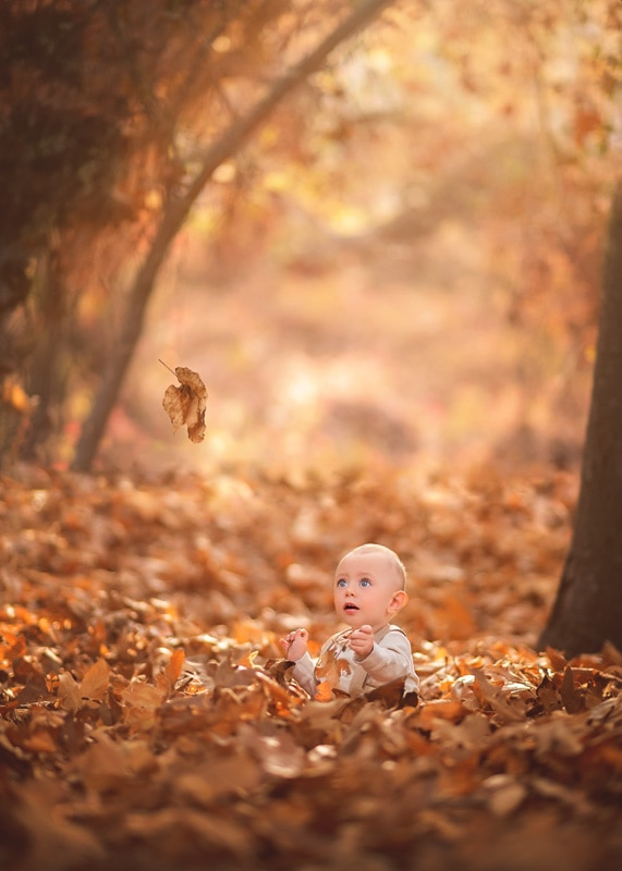 Child Photography, Baby boy immersed in leaves watching a fall colored leaf falling from a tree portrait
