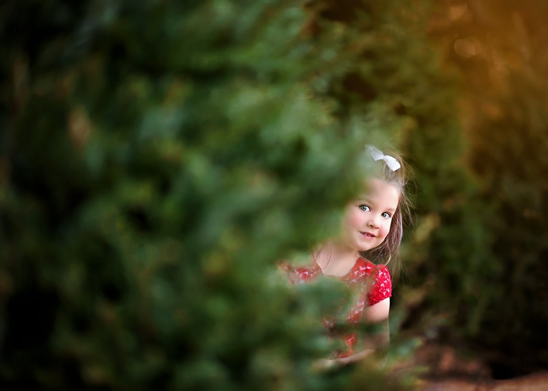 Child Photography, Toddler girl peeking through the christmas trees at a christmas tree farm portrait