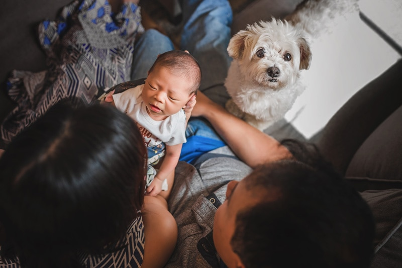 A lifestyle newborn session overlooking the parents adoring their newborn with their dog looking up at camera in San Diego